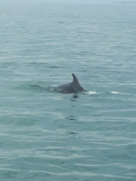 Welcome by Dolphins